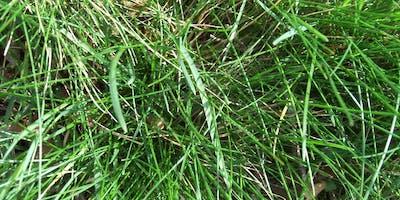 Grow A Healthy Lawn Organically