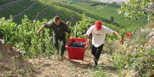 Delas Frères Rhône Wine Dinner