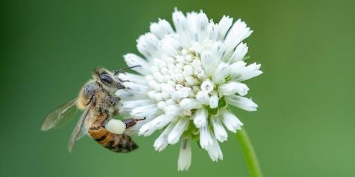 Backyard beekeeping for beginners