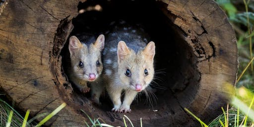 Get Quizzical for Quolls