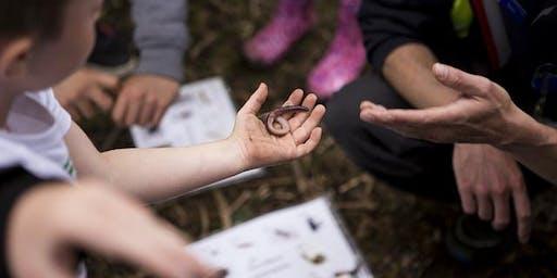 Nature & Minibeast Hunt (Killingworth Lakeside Park)