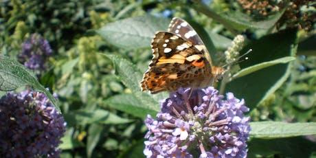 Butterfly Walk (Killingworth Lakeside Park) tickets