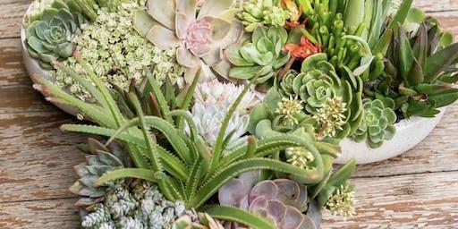Small succulent bowl workshop