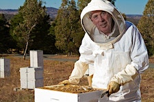 Beekeeping for Beginners - Two Day course on 7th &...