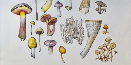 Illustrating Mushrooms with Lara Call Gastinger tickets