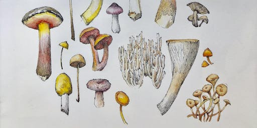 Illustrating Mushrooms with Lara Call Gastinger