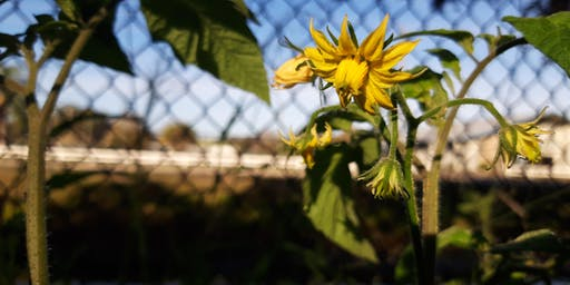 Garden Educator Training Series Part IV
