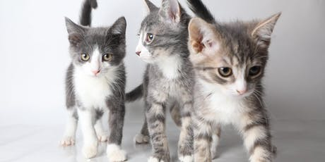 Kitten Shower at the OHS tickets