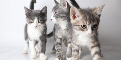Kitten Shower at the OHS