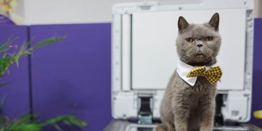 Sex, Drugs, and Cats in Bow Ties: Why bravery matters in brand film