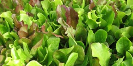 UA Hydroponic Lettuce and Leafy Greens Workshop tickets