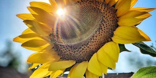 Sunflower Summer-Fest