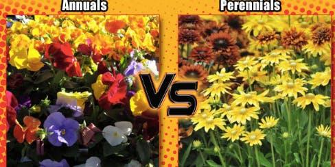 Master Gardner Talk: Annual vs Perennial