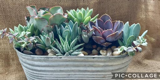 Repurposed Succulent Planters @ Barrier Island Sanctuary