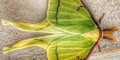 Se7en Wetlands Moths at Night  tickets