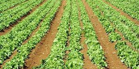 Disease ID for Vegetable & Agronomic Crops (Agents only) tickets