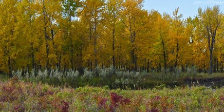 Introduction to Photography Minibus Tour in Fish Creek Provincial Park tickets