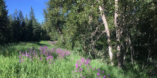 Alien Invasion Walking Tour: Native and Invasive Plants in Fish Creek Provincial Park