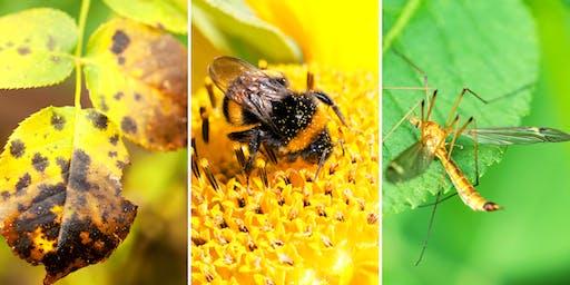 Plants vs. Pests: Put Away Your Battle Gear