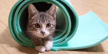 Kitten Yoga to Benefit the AWLA