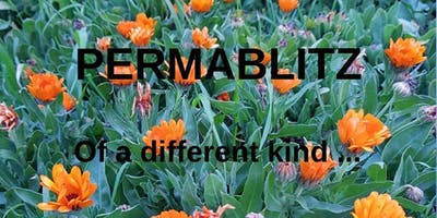 A Permablitz ... of a different kind