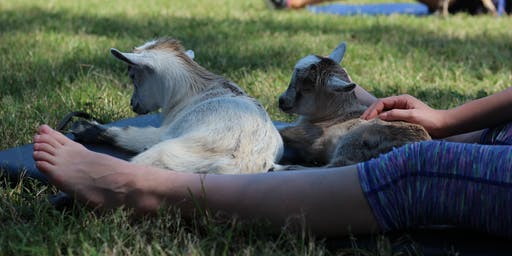 Goat Yoga Texas - Sat., July 13 @ 11:30AM