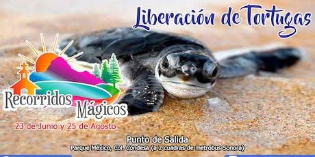 Liberación de Tortugas (Veracruz) entradas