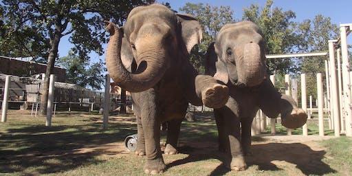 Breakfast with an Animal - Elephants