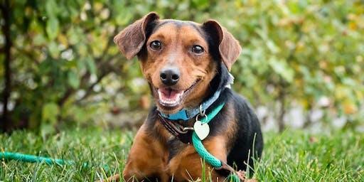 BYOD Austin Bark in Zilker Park Pawty