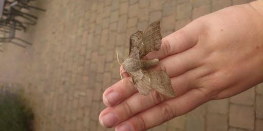 RSPB Old Moor Moth Mornings