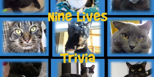 Nine Lives Trivia