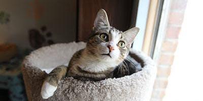 Cat Yoga featuring Crafty Cat Rescue
