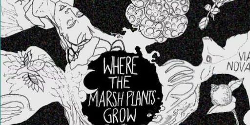 Where the Marsh Plants Grow: Workshop