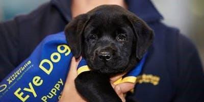 Puppy Carer Info Session: Bendigo July 4