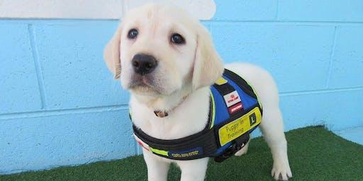 Puppy Carer Info Session: Mornington July 19