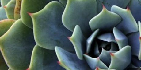 Succulent Abstract  Painting: Sip and Paint at Magnanini Winery! tickets