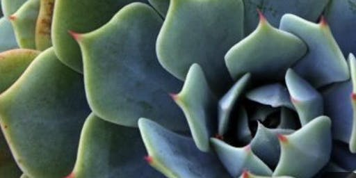 Succulent Abstract  Painting: Sip and Paint at Magnanini Winery!