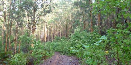 Bibbulmun Track Northcliffe to Pemberton 3 day Adult Trek Western Australia