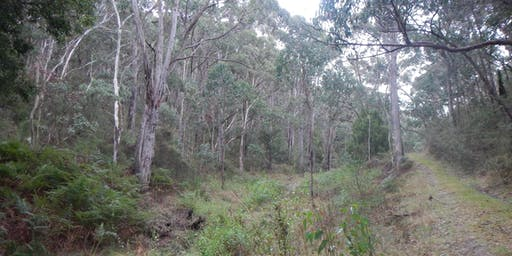 Off the beaten track - a guided walk through 2 bushland restoration sites near Kuitpo
