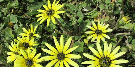 Post-fire weed ID and non-chemical control of pasture weeds tickets