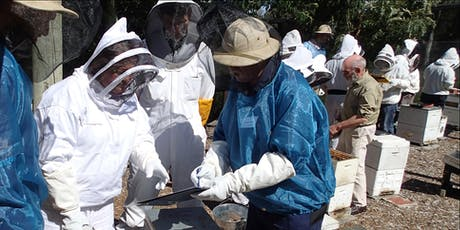 Bees: Beginners' Hands-on Beekeeping Course (6th October & 20th October 2019) tickets