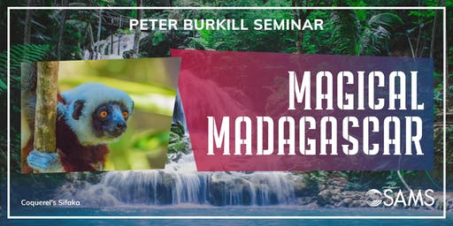 Magical  Madagascar by Peter Burkill