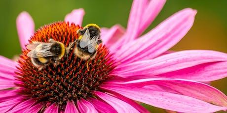 Sustainable Garden Design Course / Cwrs Dylunio Gardd Cynaliadwy tickets