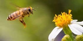 Beekeeping - Pest & Disease Management
