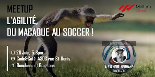 L'Agilité, du macaque au soccer ! #Agile