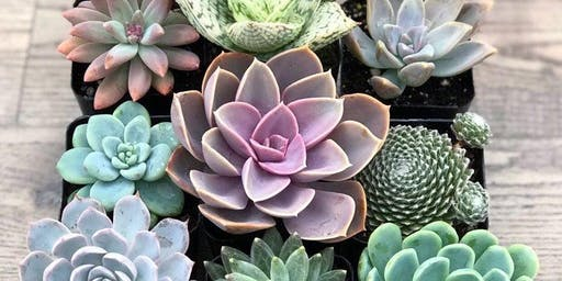 Succulent Planting Party & Care Guidelines Using Essential Oils