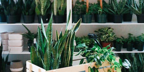 Basic Indoor Plant Care & Selection tickets