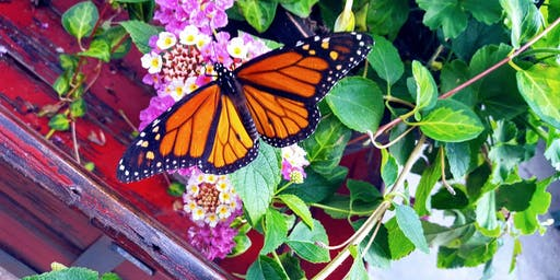 Education Series: Pollinator Plants and Butterfly Release - Mahomet, IL