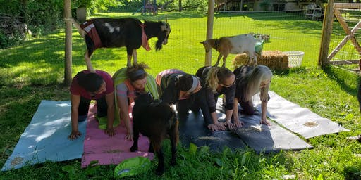 1 Hour Goat Yoga