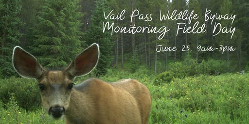 Vail Pass Wildlife Byway Monitoring Field Day